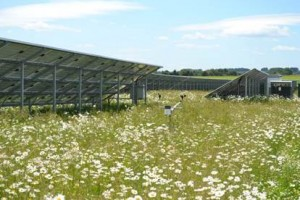 Example solar farm with wild flowers