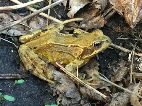 Park Street Garden Frog Only May 2017